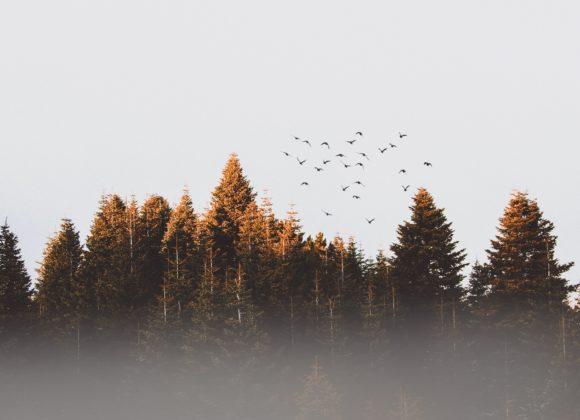 Условие за прощение