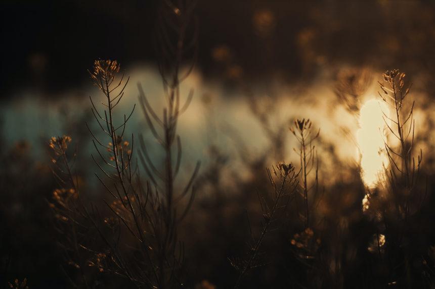 Светлина да изгрее из тъмнината